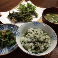 天ぷら2種とコシアブラごはん